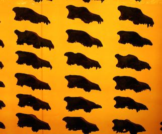 From Tar Pits to Game of Thrones: The Hidden History of the Dire Wolf
