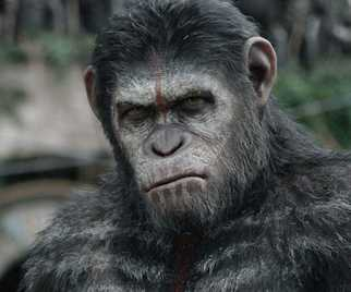 How Science Could Make a Chimp Like DAWN OF THE PLANET OF THE APES' Caesar