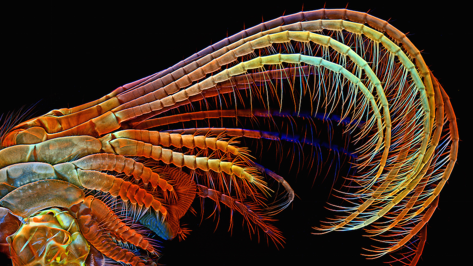 2014's Best Images of the Microscopic World