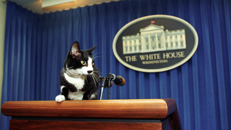 Pickstarter: Socks the Clinton Cat's Lost Video Game Lives Again!