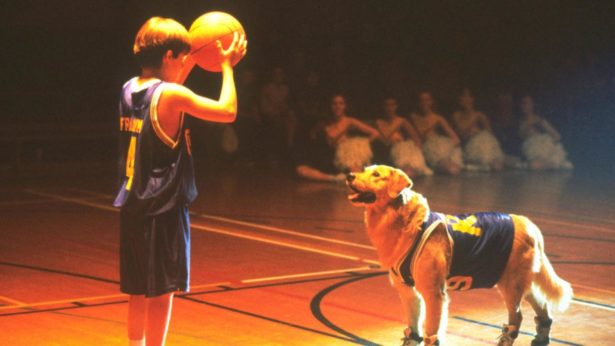 Air Bud dog