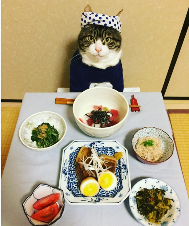 Cat Pictures in Front of Food