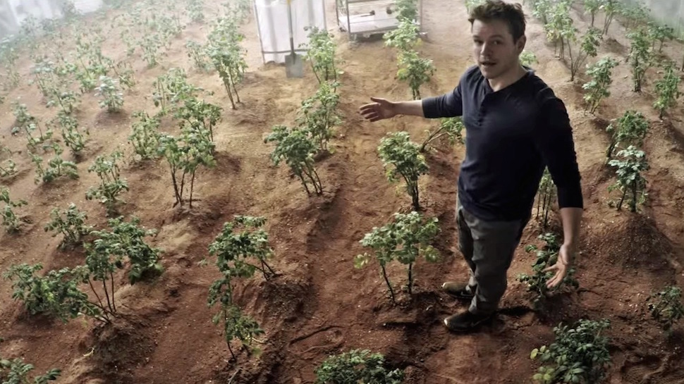 Scientists Prepare to Eat a Radish Grown in Martian Soil