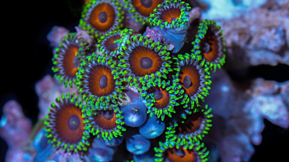 """Coral Colors"" Short Film Reveals the Stunning Aliens of Our Oceans"