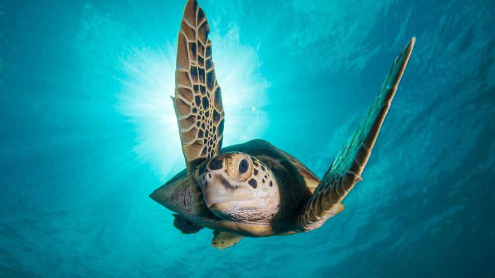 Watch 10 Hours of BBC Ocean Footage and Your Worries Will Float Away