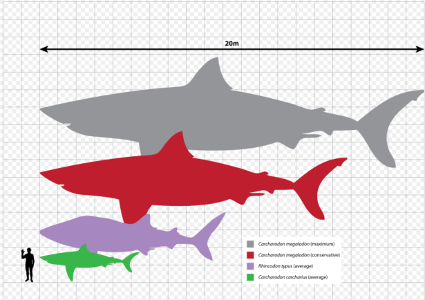 The Meg's True Size According to Math_6
