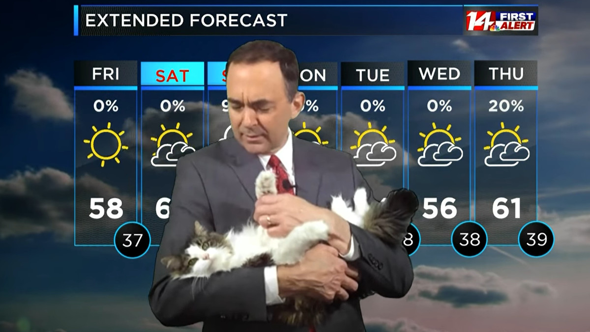 Betty the Weather Cat