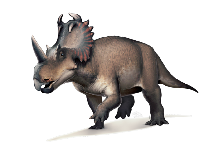 Researchers in Canada have discovered cancer in a dinosaur fossil for the first time ever.