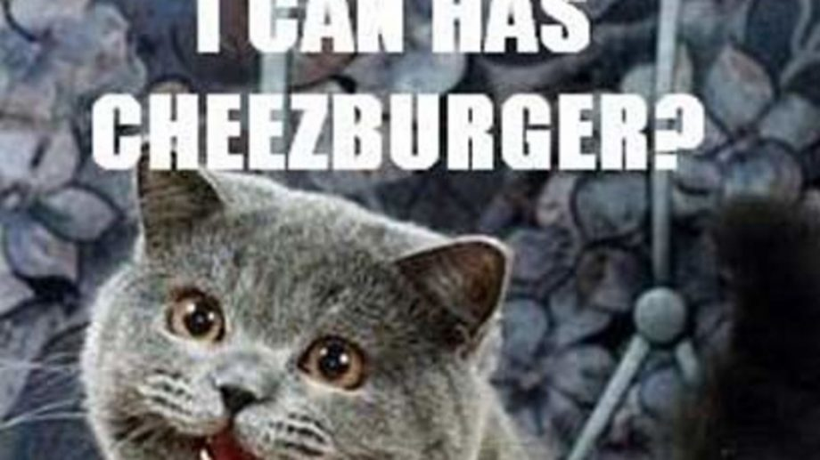 Photo of grey cat with text saying I can has cheezburger in white