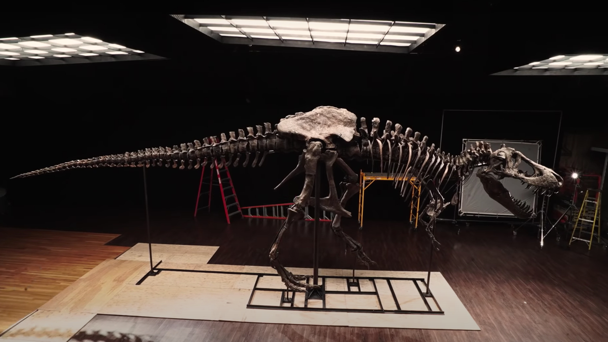 An ultra-well-preserved T. rex fossil is being sold at auction for $6-8 million.