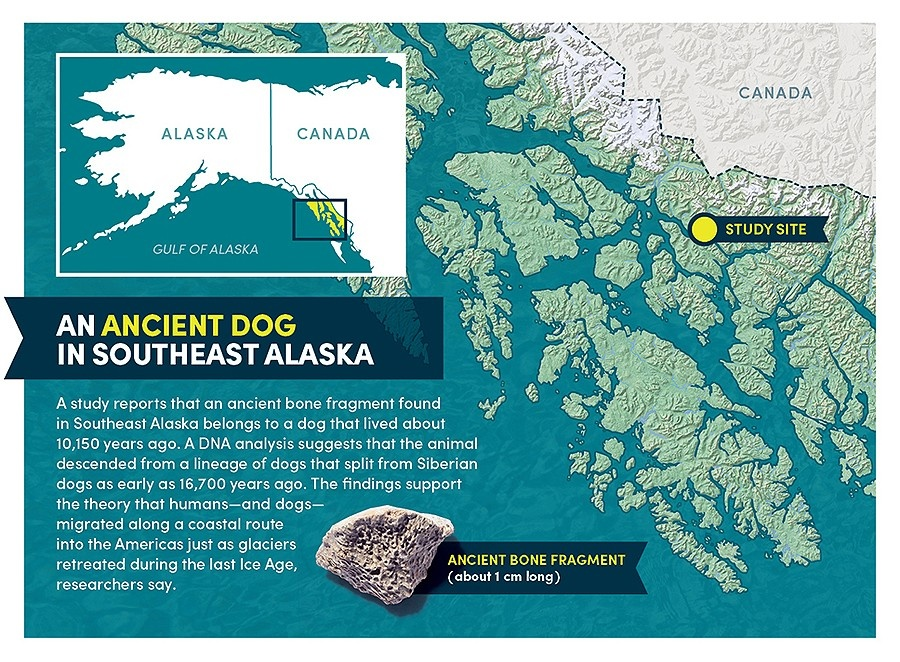 Scientists have found DNA belonging to the oldest-known domesticated dog in America.