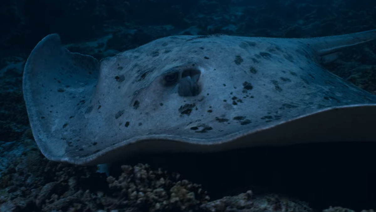 A hunting stingray in Earth At Night In Color