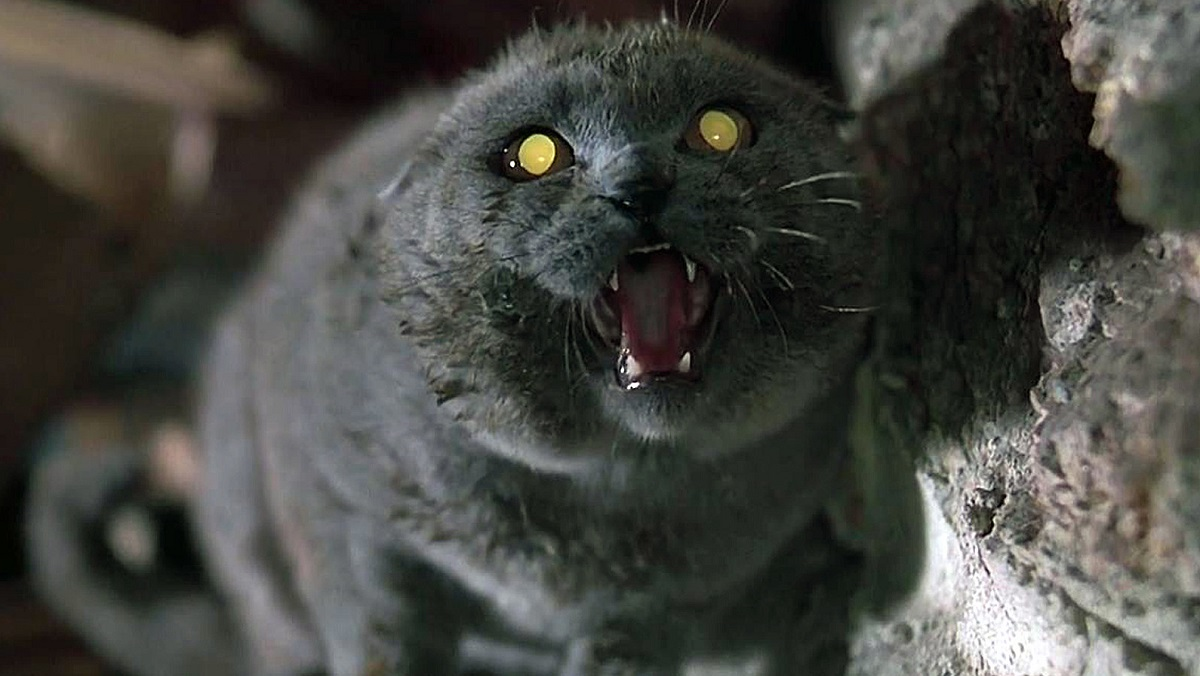 Winston Churchill is maybe horror cinema's most iconic evil pet. Adopt a lookalike from Texas ChainPaw.