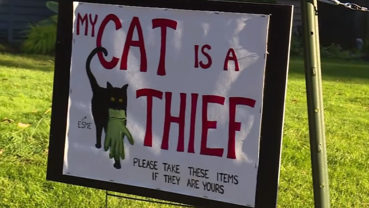 photo of a white sign that says my cat is a thief in red letters with a picture of a black cat holding a grey glove. bottom of sign says please take these items if they are yours. border on sign is black
