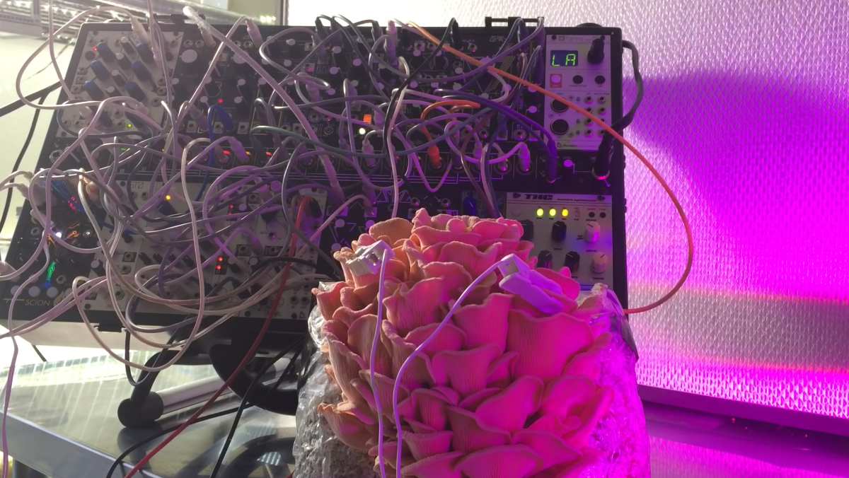 A large mushroom with many wavy caps plugged into a synthesizer underneath purple light.